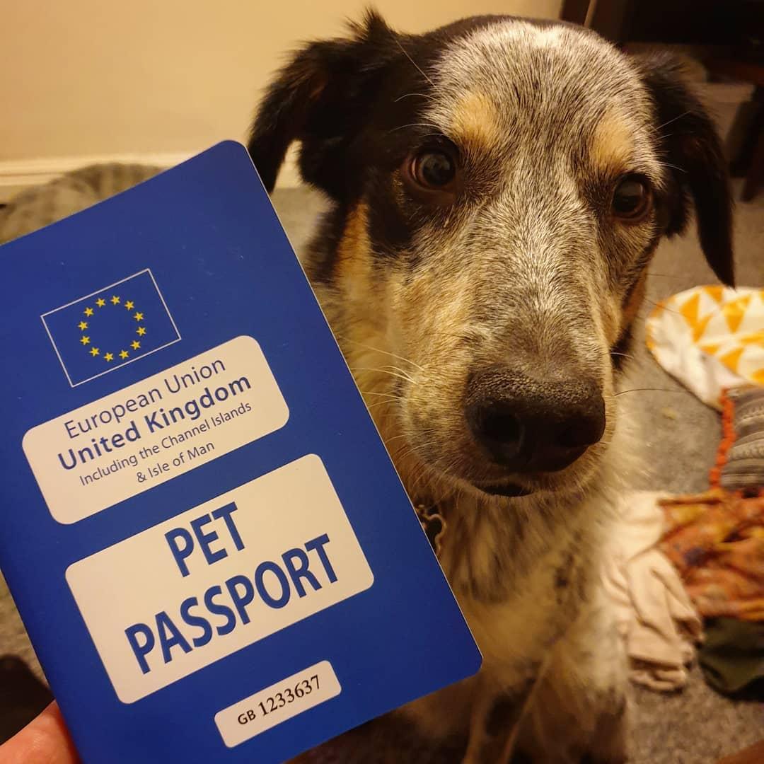 A Dog Poses With His EU Pet Passport.