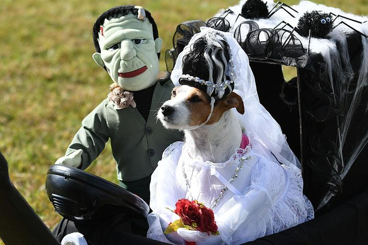 Pet Friendly Howl-O-Ween Family Fest at Marty's Place