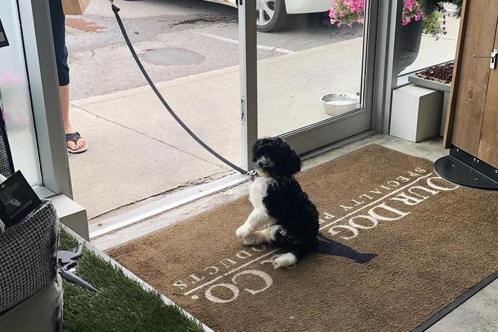Pet Friendly Our Dog & Company