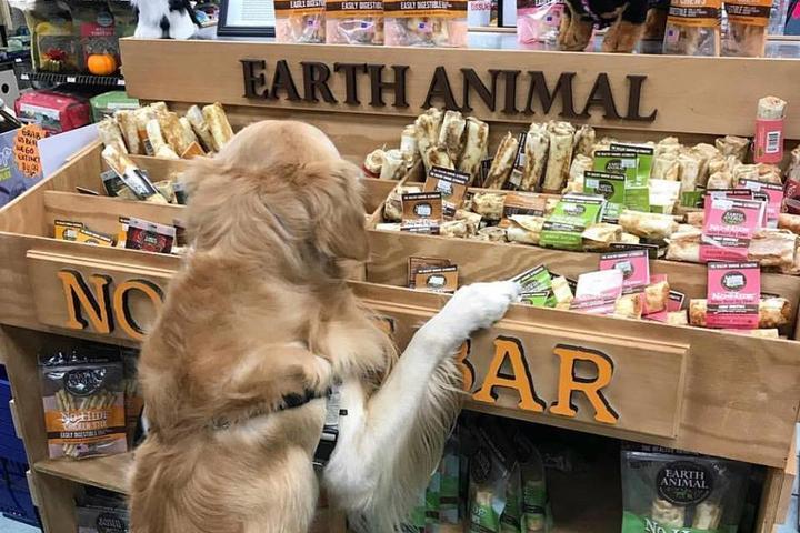 Pet Friendly Rumford Pet Center
