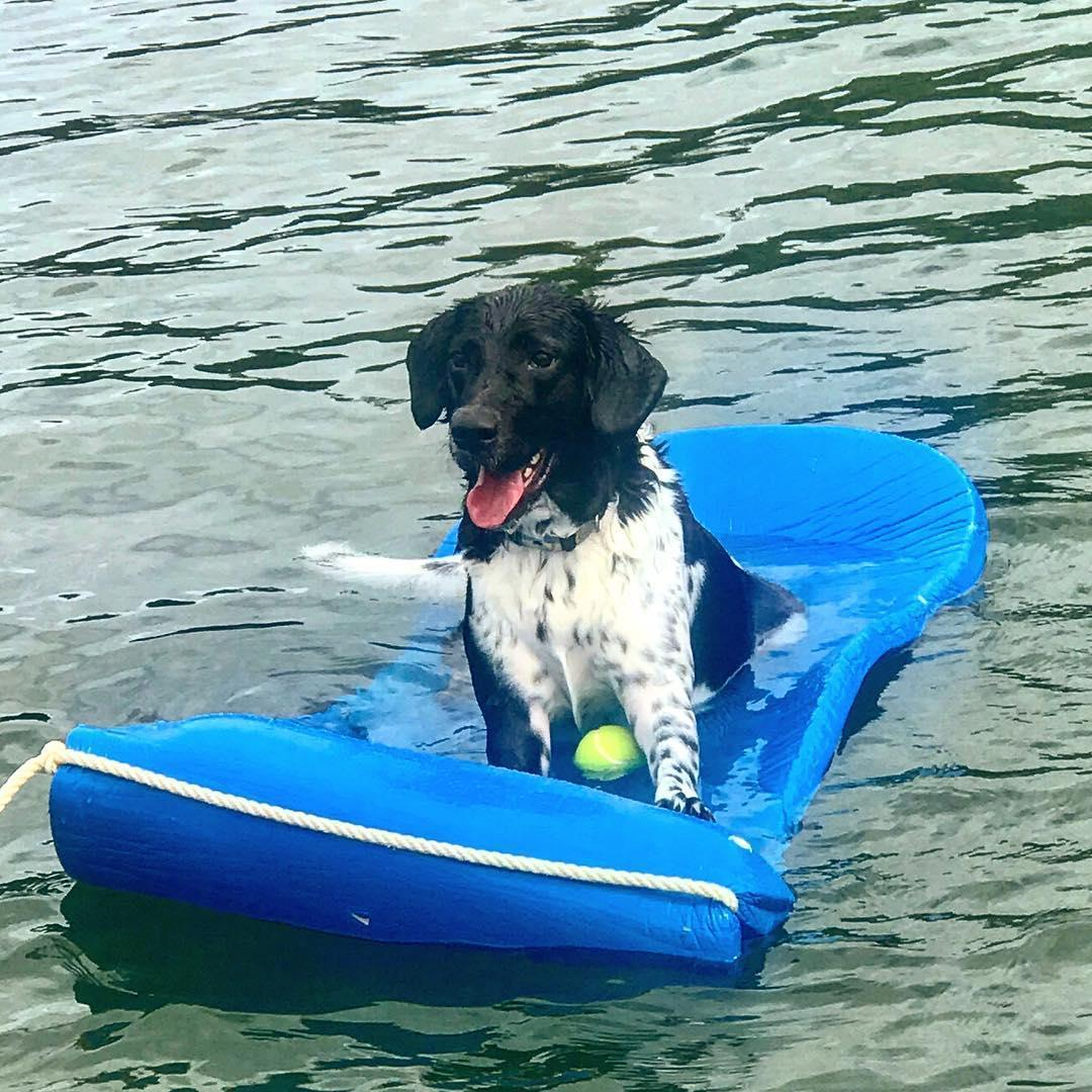 A dog relaxes on a float with his tennis ball at the dog-friendly Table Rock State Park.