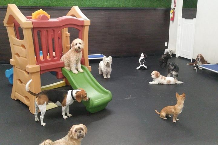 Pet Friendly D Pet Hotels