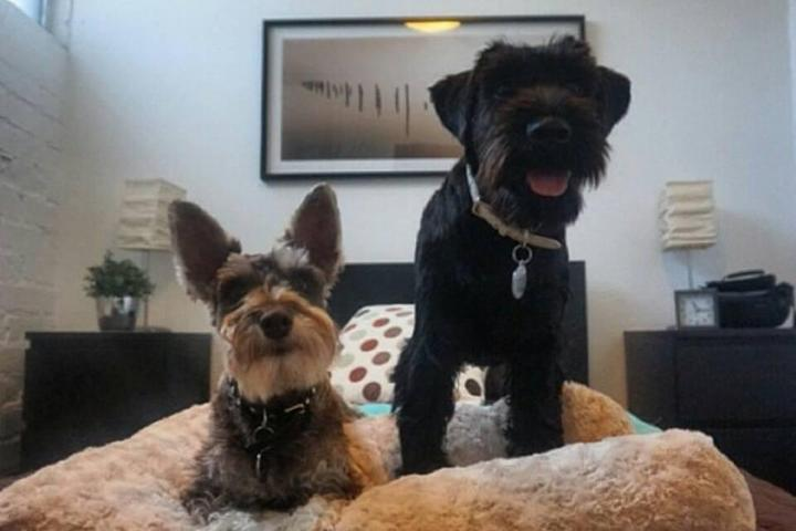 Pet Friendly D Pet Hotels