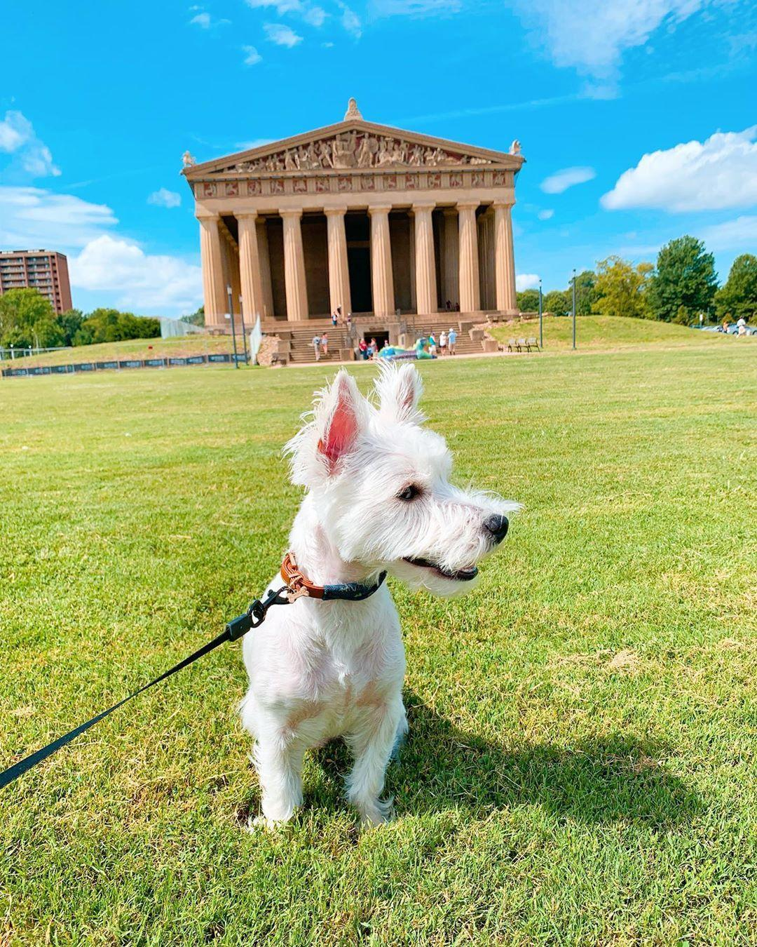 A white dog stands in front of a replica of the Parthenon at Centennial Park in dog-friendly Nashville.