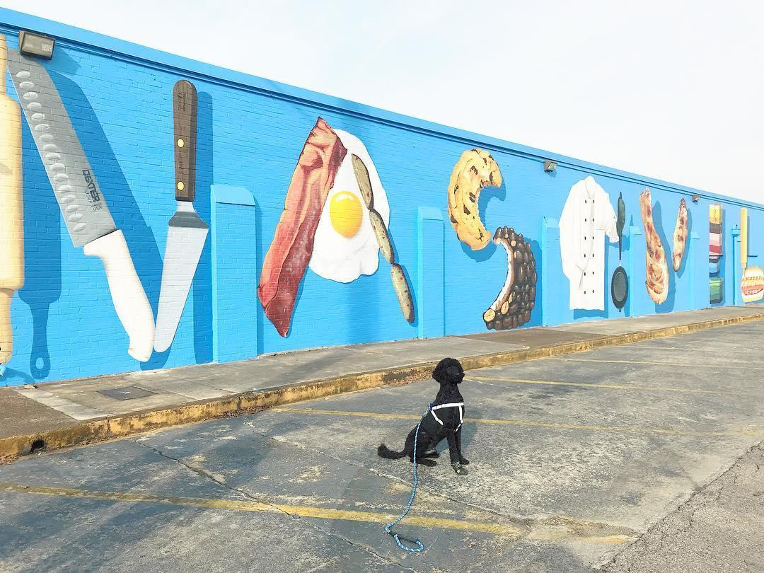 A standard Poodle sits in front of a mural in dog-friendly Nashville.