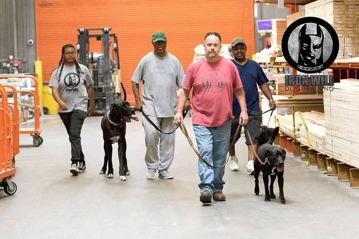 Pet Friendly Iron Will Dog Training