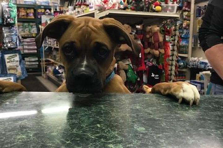 Pet Friendly Pet Headquarters