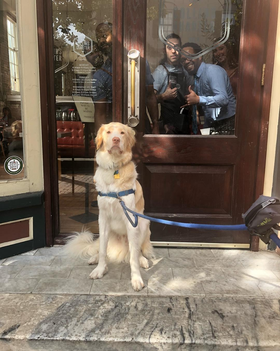 A dog stands at the door of Collins Quarter, a coffee shop in dog-friendly Savannah.