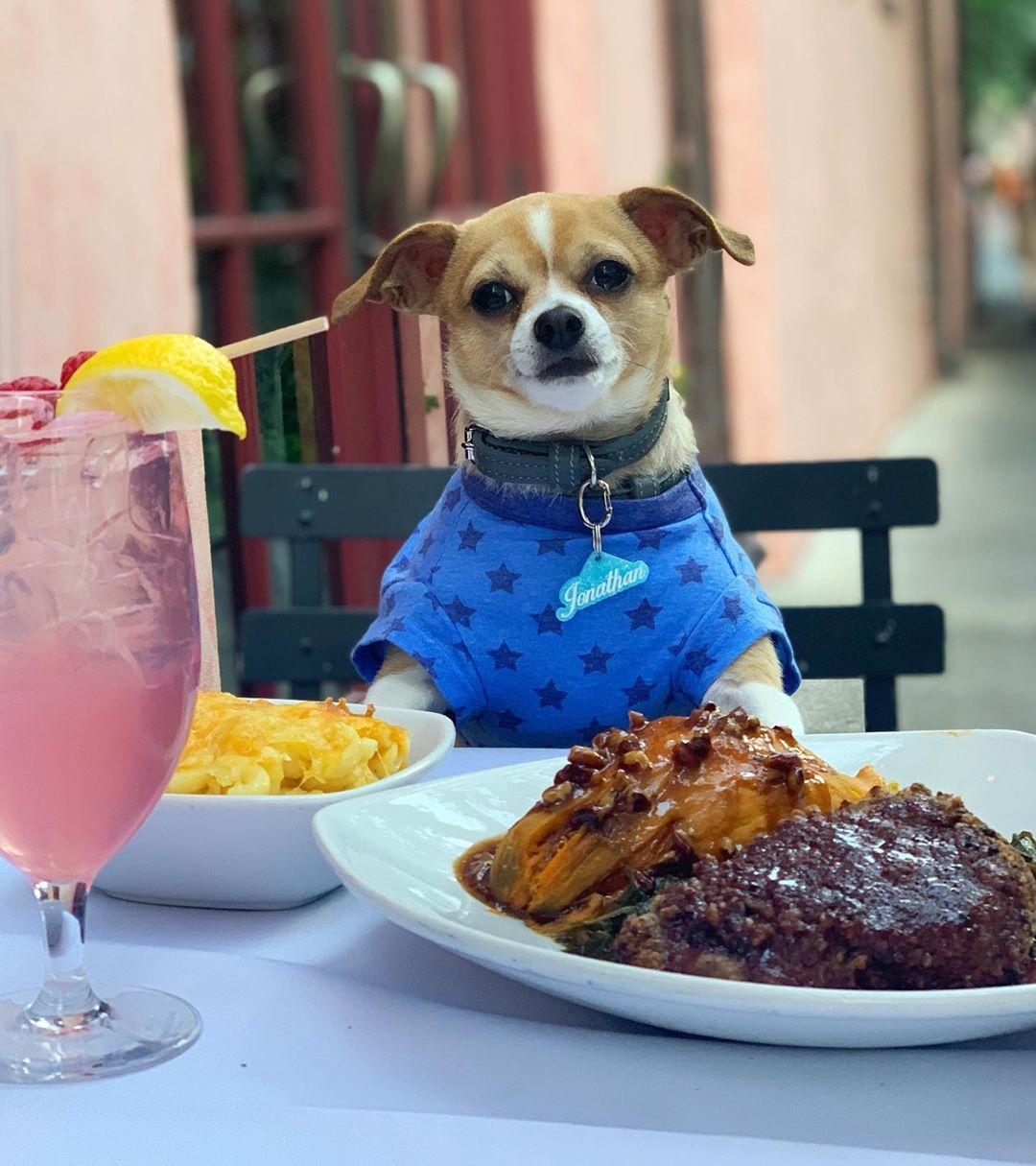 Jonathan the dog dines outside at the Olde Pink House.