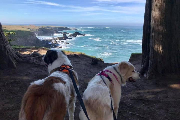 Pet Friendly Hike Dog NorCal
