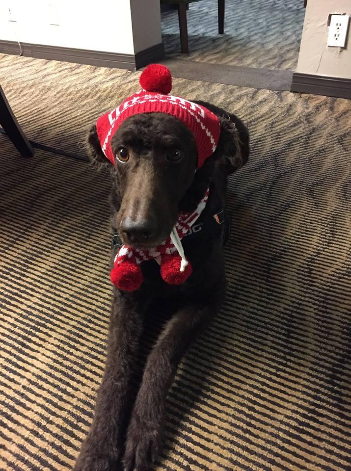 A dog wearing a red hat stretches out on the floor of the pet-friendly Embassy Suites