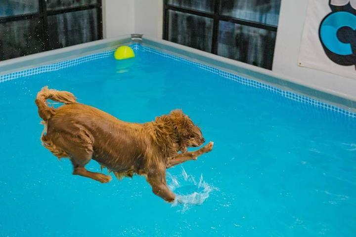 Pet Friendly Dog Pool Club