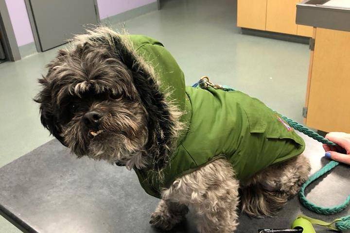 Pet Friendly Waterbury Veterinary Hospital