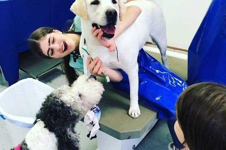 Pet Friendly PupTub