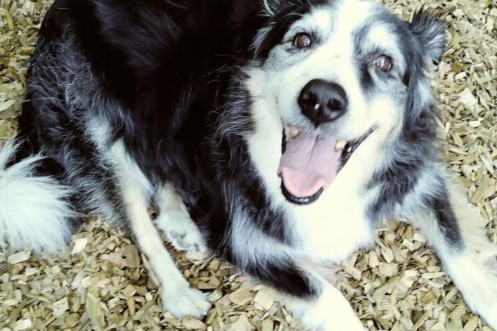 Pet Friendly Senior Dog Rescue of Oregon