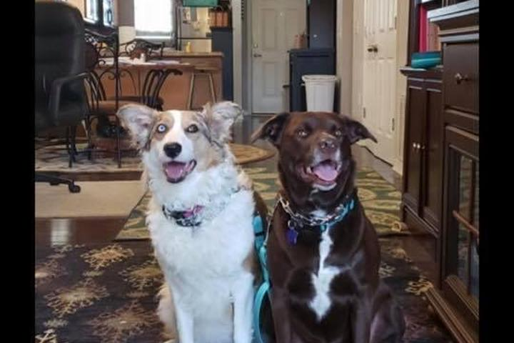 Pet Friendly Florida 5-Star Dog Training LLC