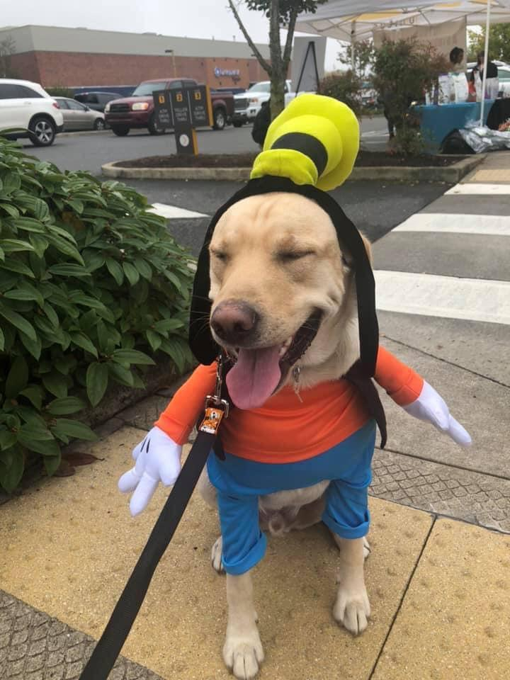 A Dog Dressed as Goofy.