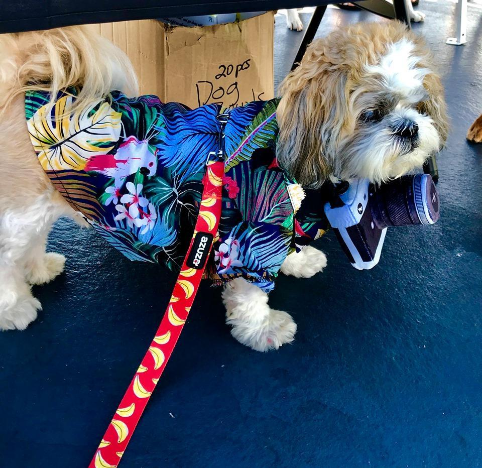 A Dog Dressed in a Halloween Costume as a Tacky Tourist.