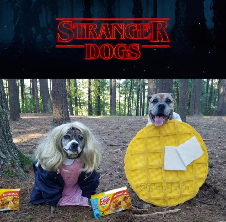 Dogs Dressed as Characters From the Stranger Things TV Show.