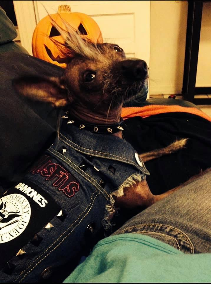 A Dog Dressed in a Punk Rock Vest With a Ramones Patch.