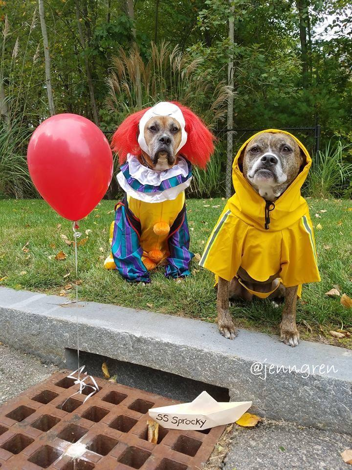 Dogs Dressed in Halloween Costumes as Pennywise the Clown and Georgie from IT.