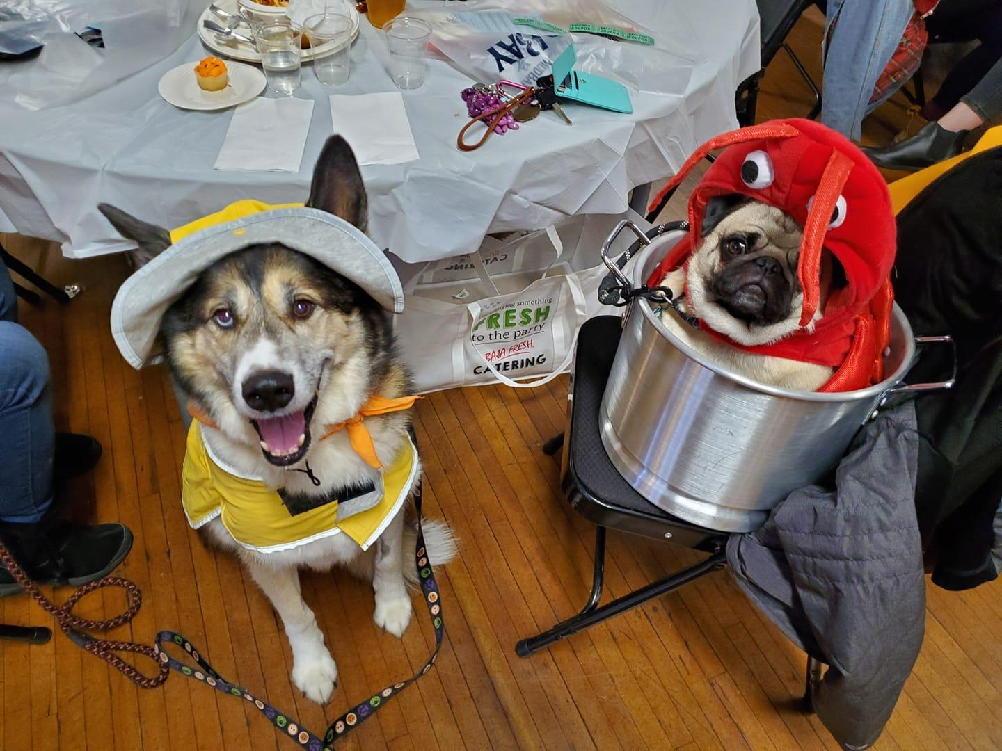 Two Dogs Dressed in Halloween Costumes as a Lobster and a Fisherman.