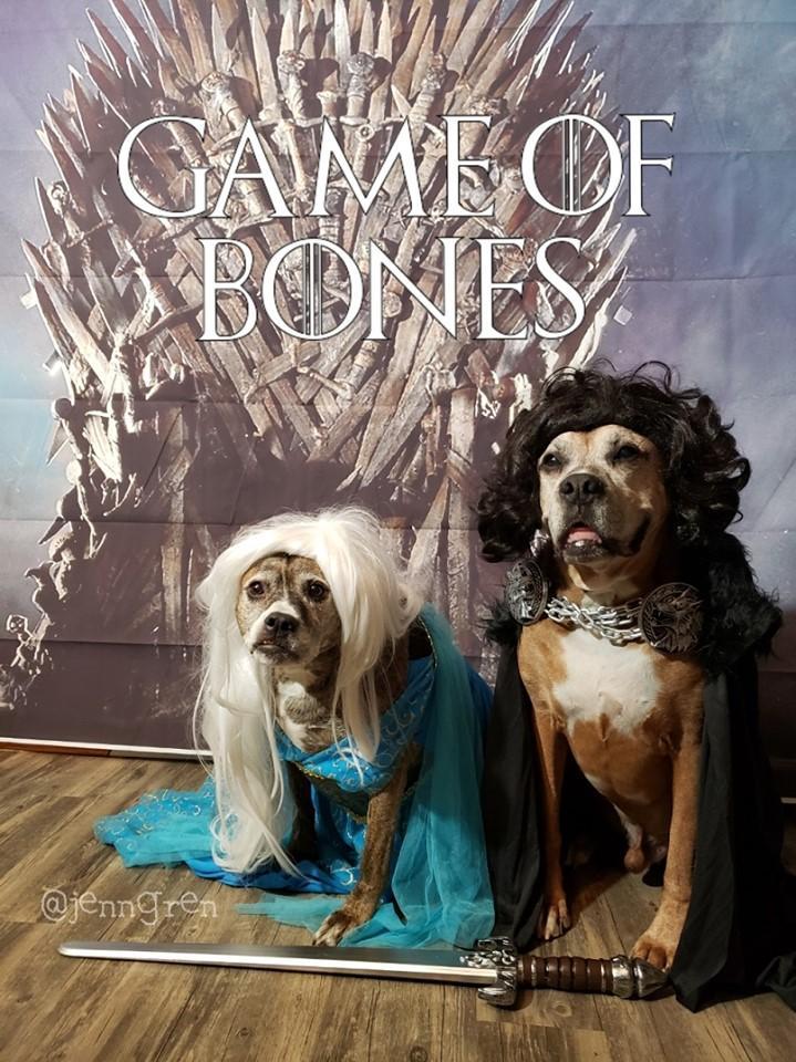 Dogs Dressed in Halloween Costumes as Khaleesi and Jon Snow