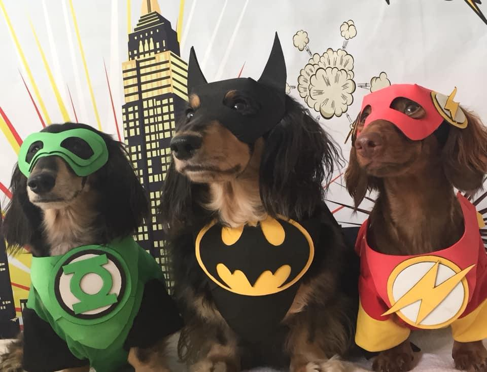 A Trio of Dogs Dressed in Halloween Costumes as Super Heroes.