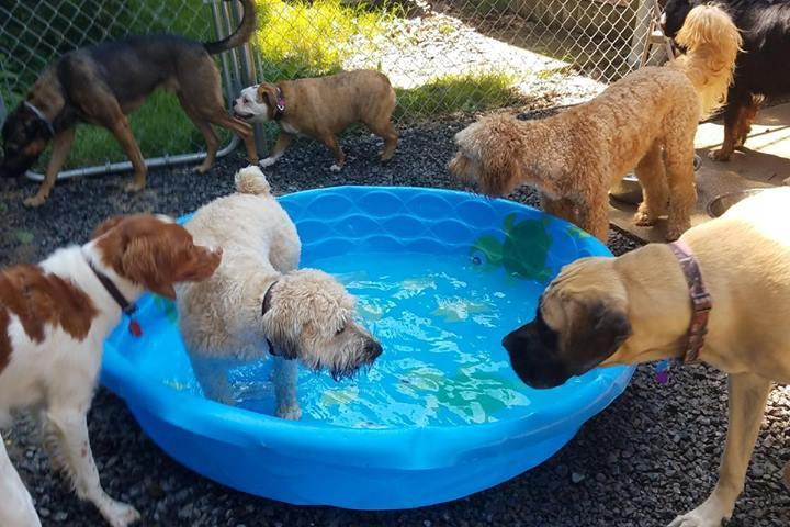 Pet Friendly Unleashed Doggy Daycare
