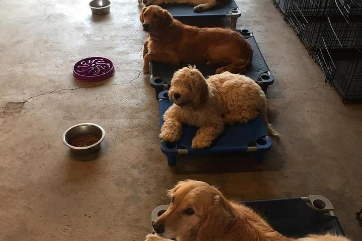 Pet Friendly Charlo Training