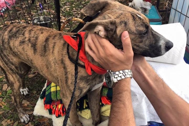 Pet Friendly Royal Pet Rescue