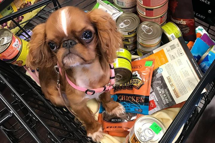 Pet Friendly Healthy Pet Products South Hills