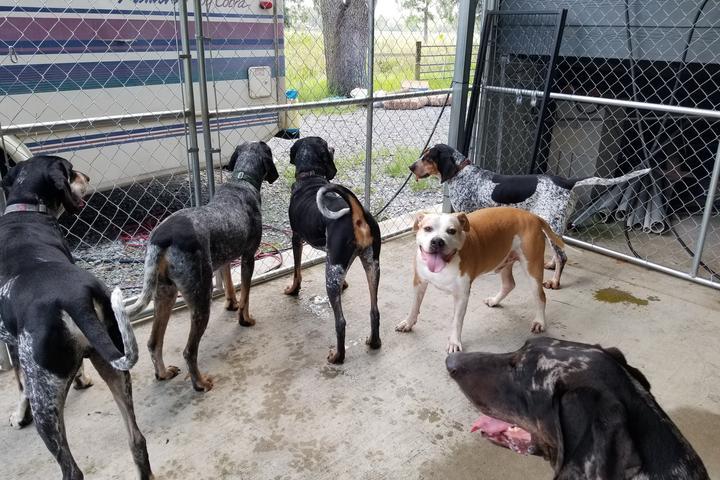 Pet Friendly Villalobos Rescue Center