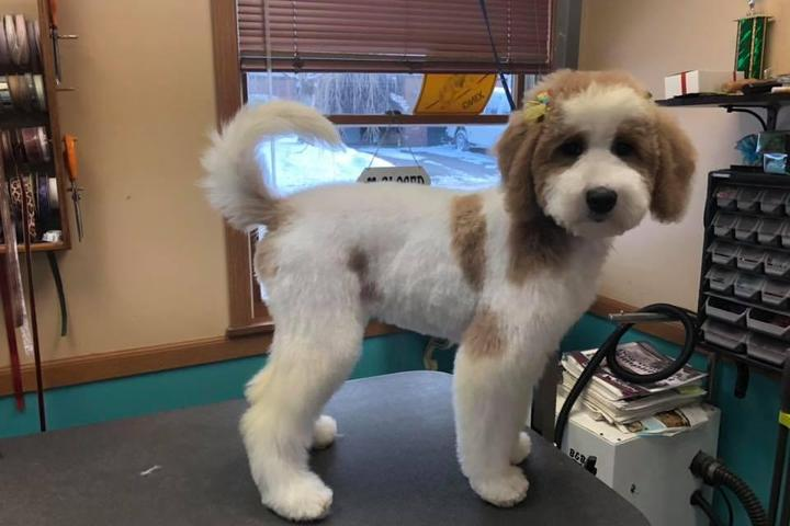 Pet Friendly Pampered Paws-N-Claws