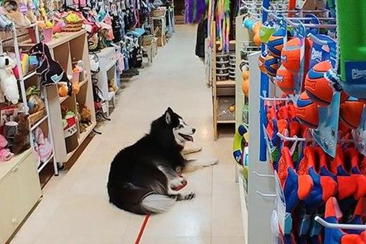 Pet Friendly Silly Willie's Pet Boutique