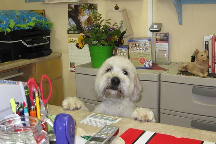 Pet Friendly Pet Paws Dog Wash & Nutrition Center