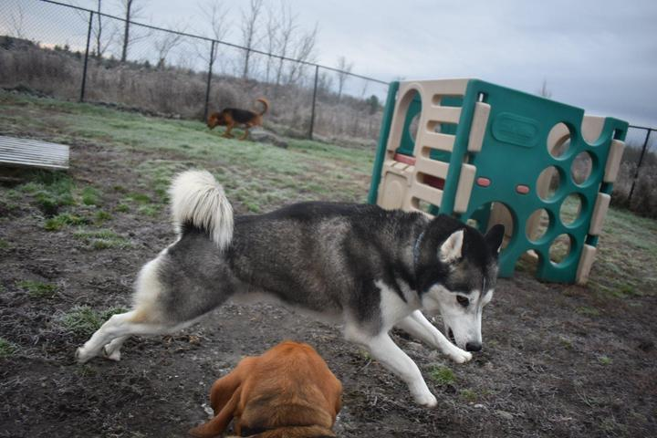 Pet Friendly Tails & Trails Country Pet Resort