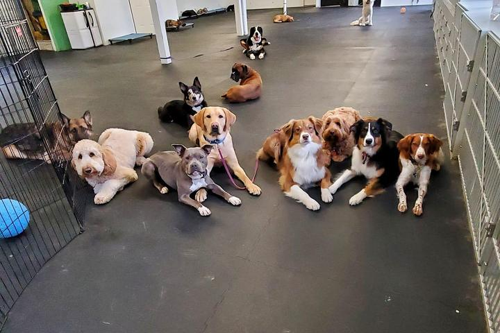 Pet Friendly 4 Paws Academy