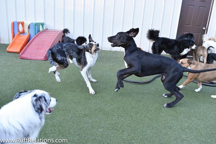 Pet Friendly Ruff Relations