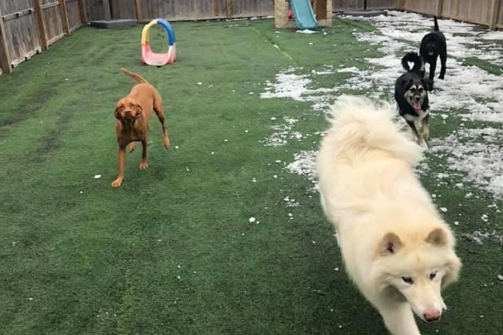 Pet Friendly K-9 Funhouse Doggy Day Care & Grooming