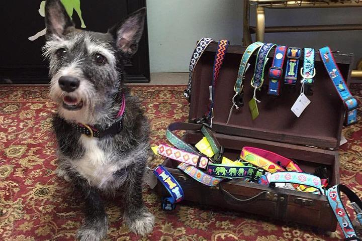 Pet Friendly Dogology
