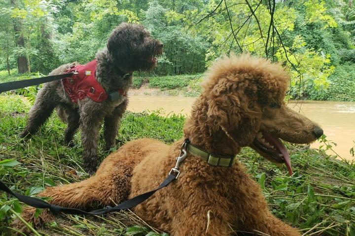 Pet Friendly Pant & Wag: DC Dog Adventures and DC Dog Fitness