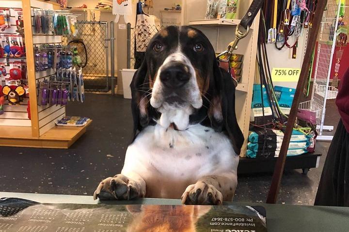 Pet Friendly Morgan's Paws Pet Care Center