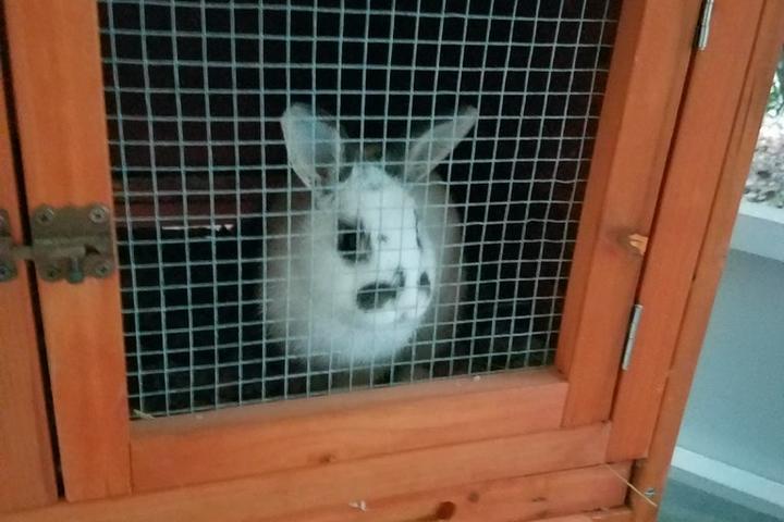 Pet Friendly Xanadu Pet Care
