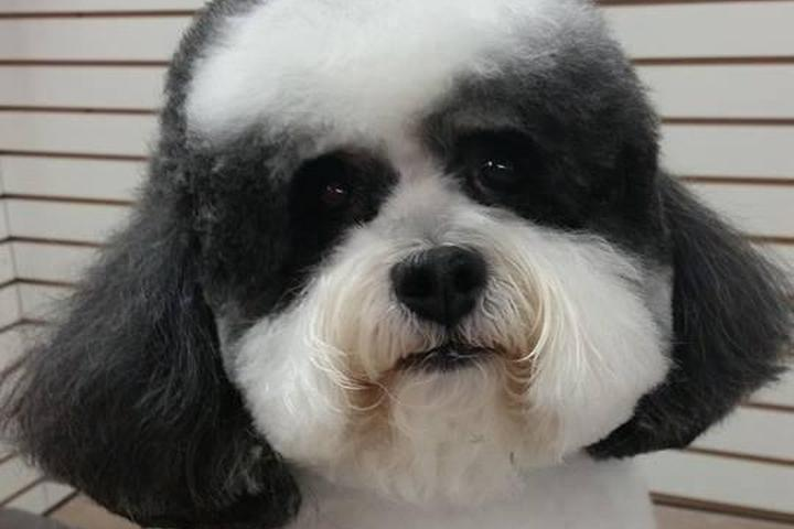 Pet Friendly Wags & Whiskers Dog Grooming