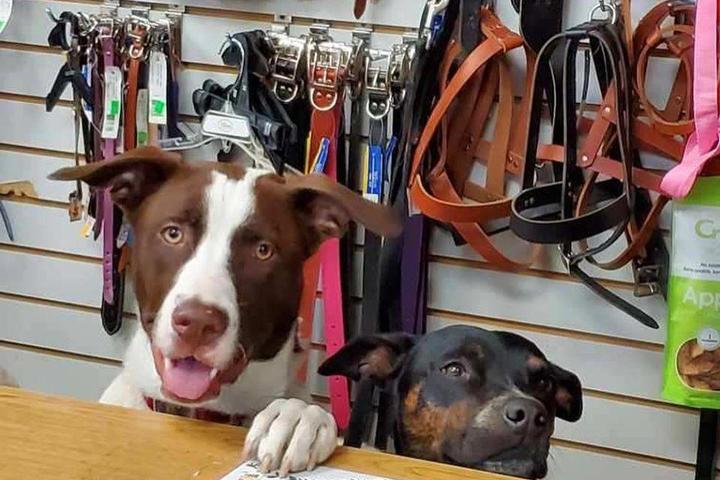 Pet Friendly Wagging Tails