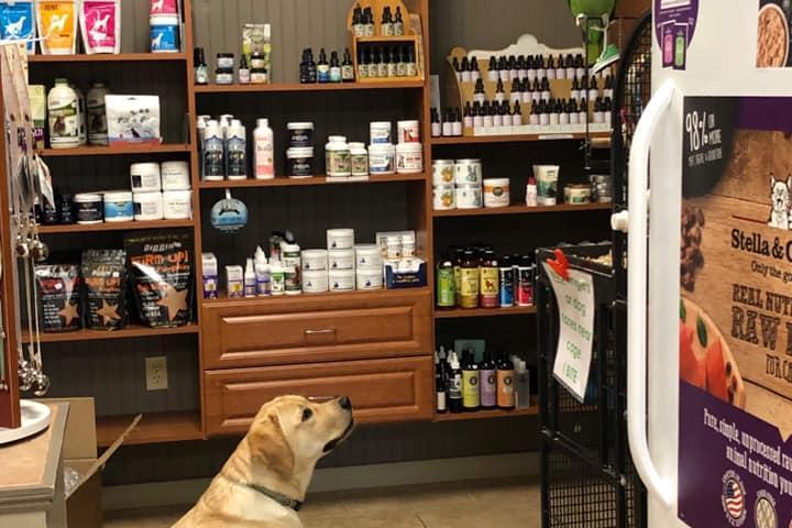 Pet Friendly The Healthy Animal