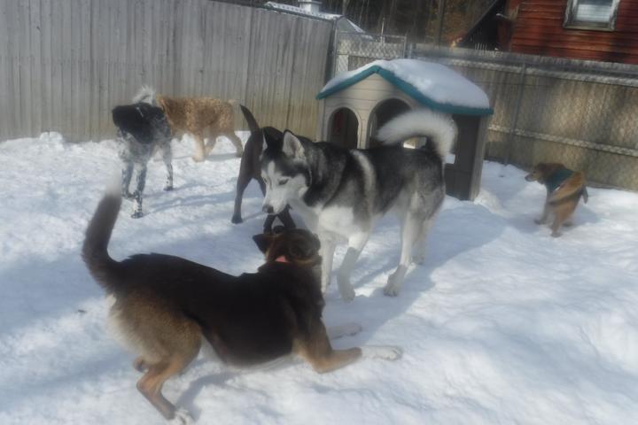 Pet Friendly The Yellow Dog's Barn