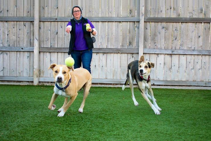 Pet Friendly Central Bark Doggy Day Care