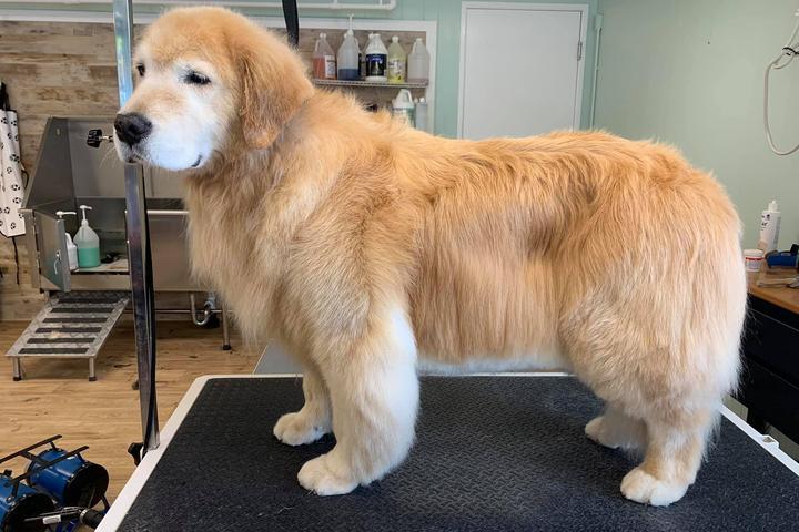 Pet Friendly Good Dog! Grooming